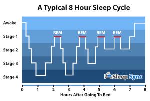 vier fasen in je slaap
